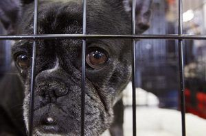 Ginger's Pet Rescue in Seattle Times | Housing Crisis for Dogs