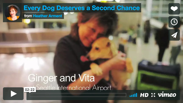 Ginger's Pet Rescue News Video