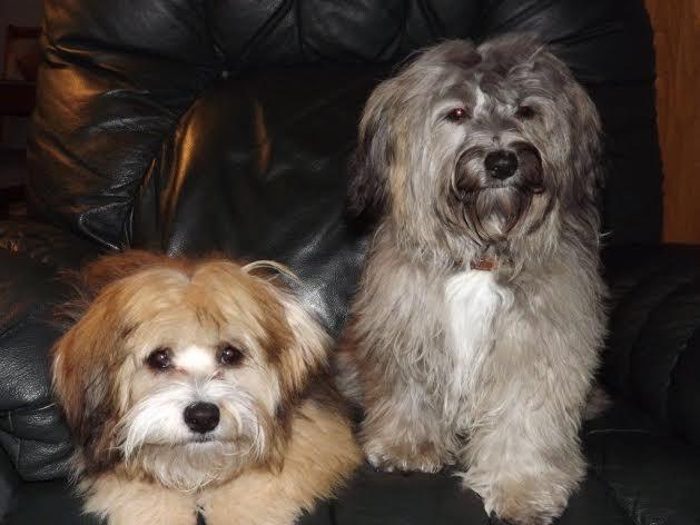 Happy Tails   Abbie & Callie