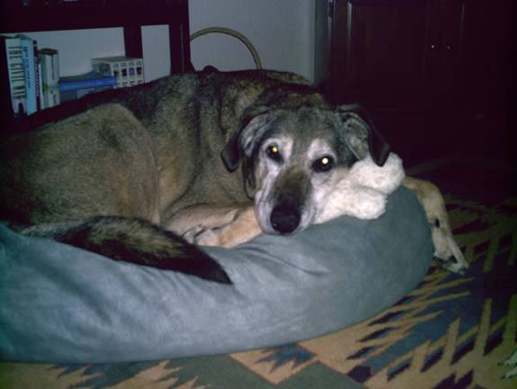Happy Tails | Old Dogs | Max