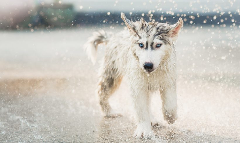 Keeping Your Pet Cool in Summer Months
