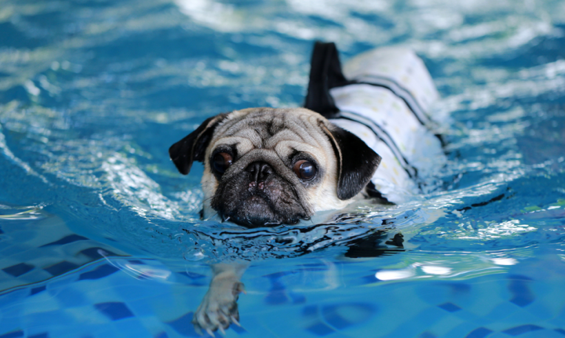 4 Tips For Helping and Healing With Canine Hydrotherapy