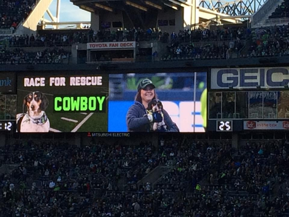 From Rescue to Star | Ginger's Pet Rescue Alum Dazzles Seahawks