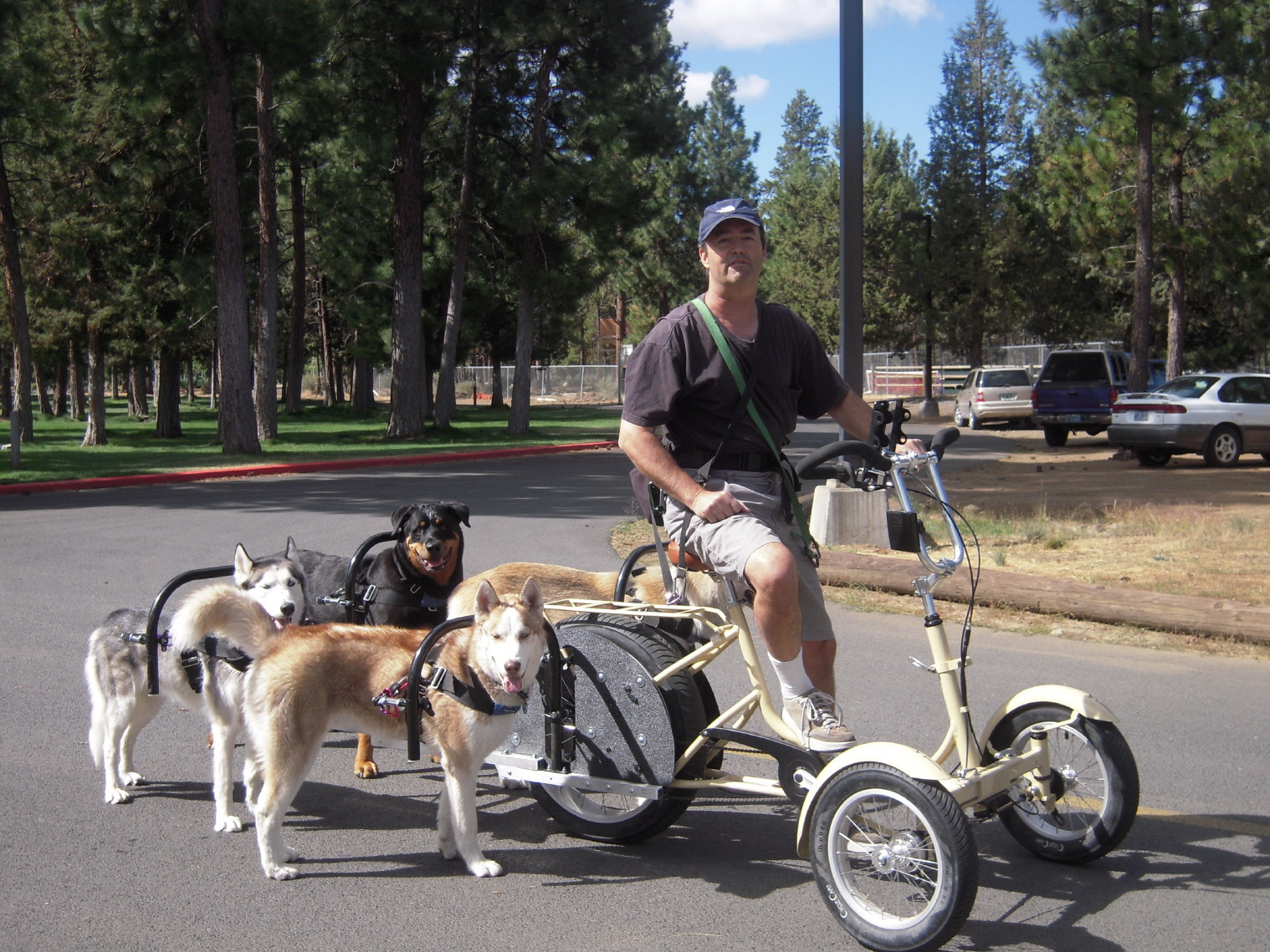 Dogpowered Scooter | A Great Way To Exercise Your High Energy Dog