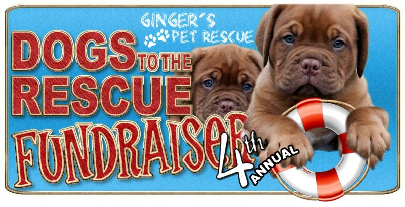 Gingers Pet Rescue Seattle Death Row Dog Rescue
